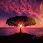 Mammutbaum vor rotem Himmel