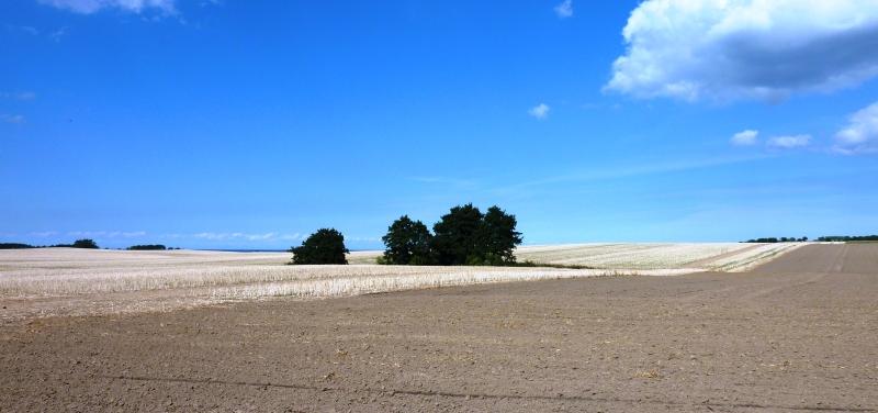 Bäume in Wüstenlandschaft unter blauem Himmel