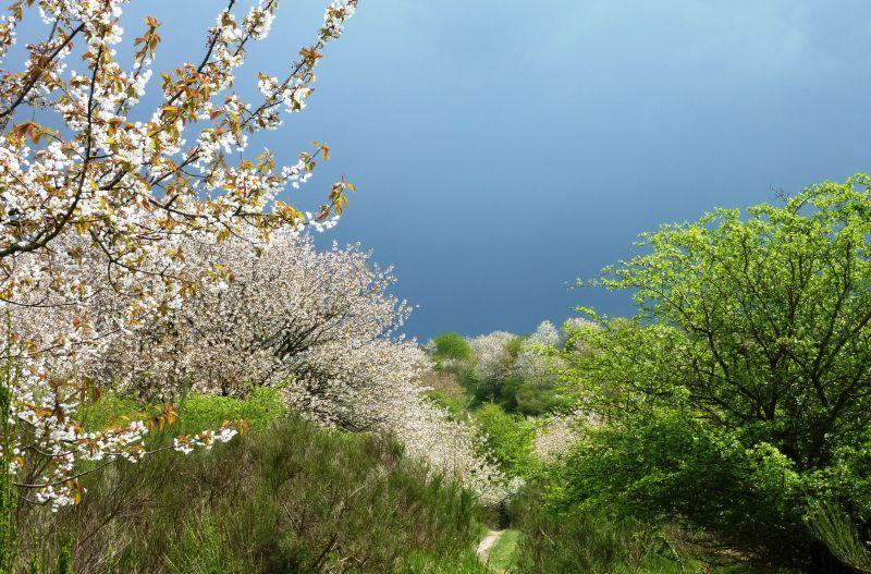 Blühende Landschaften als Symbol für die heilere Welt von morgen.
