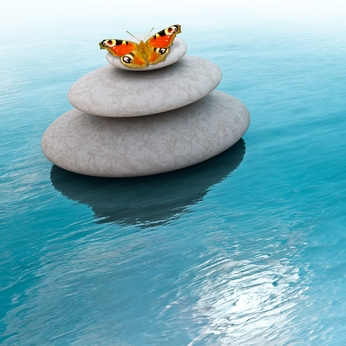 Schmetterling auf Steinen