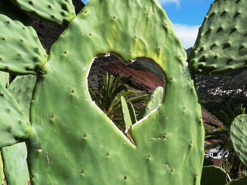 Kaktusblatt mit Loch in Herzform
