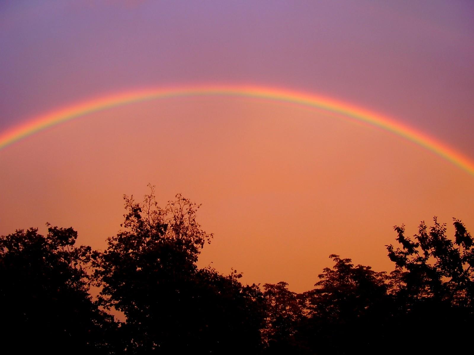Regenbogen über Bäumen